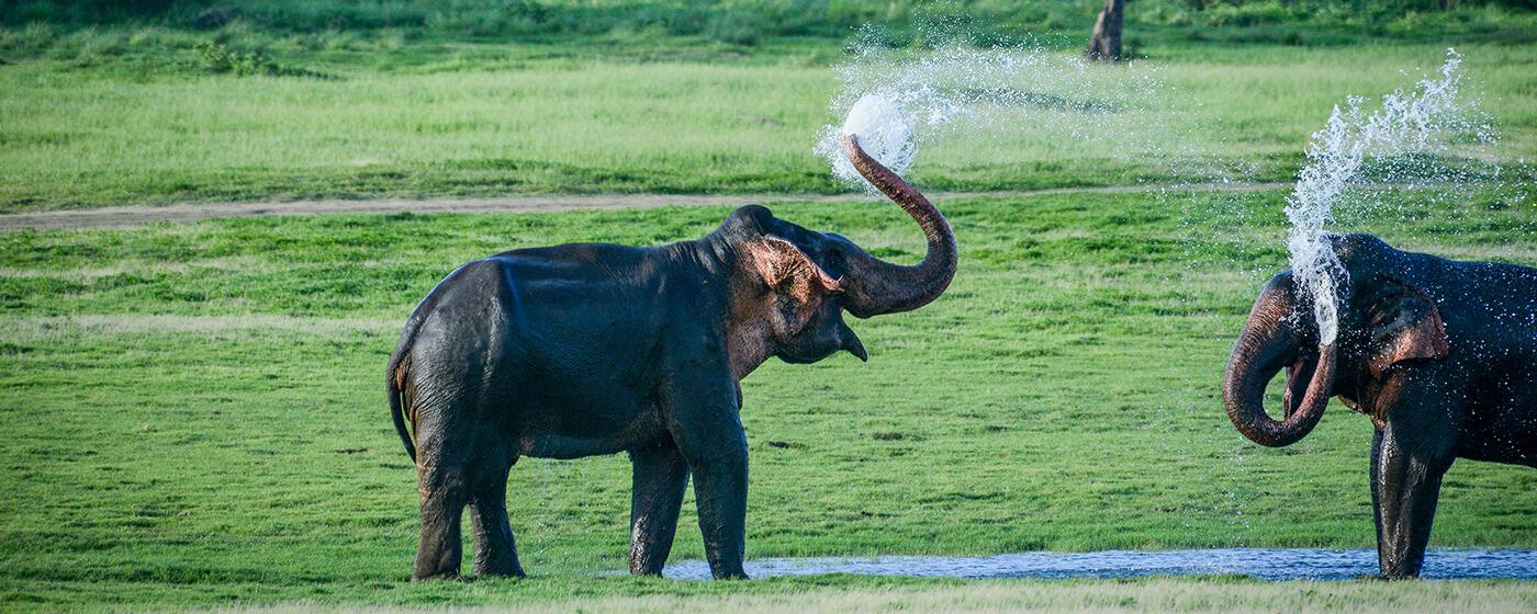 Wild Life Sri Lanka