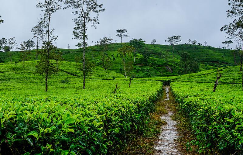 Sri Lanka's Beautiful Collection of Flora