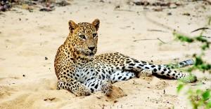 Wilpattu National Park in Sri Lanka