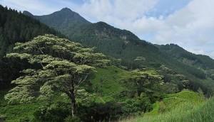 Knuckles Mountain Sri Lanka