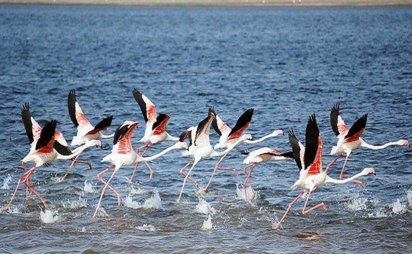 Migrant bird specialties at Bundala National Park
