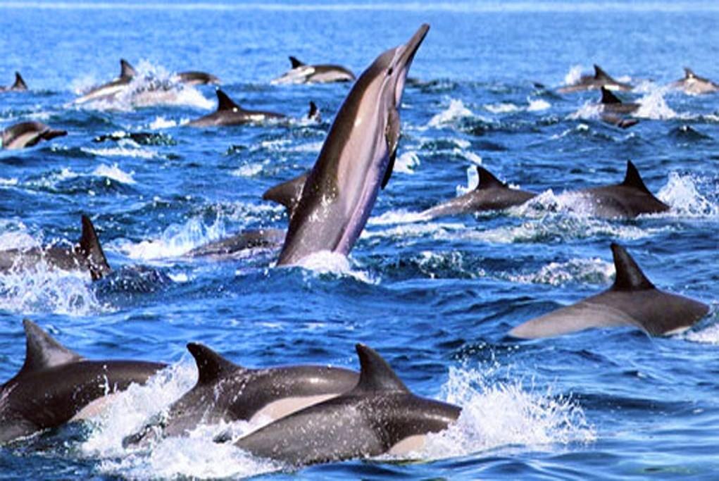 Dolphin Watching in Mirissa