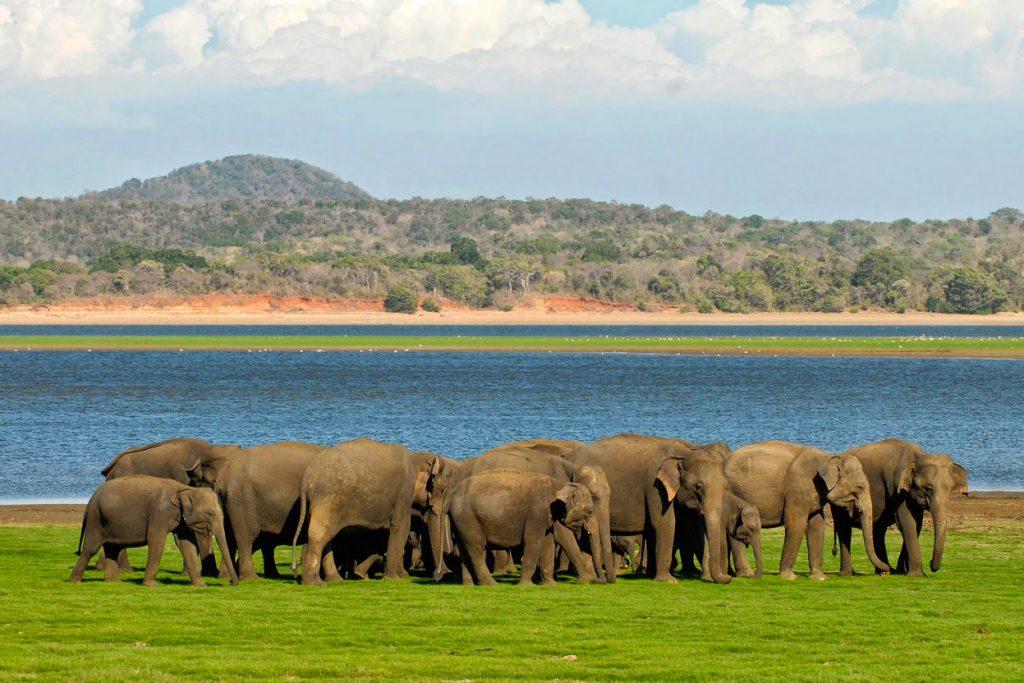 Minneriya National Park in Sri Lanka