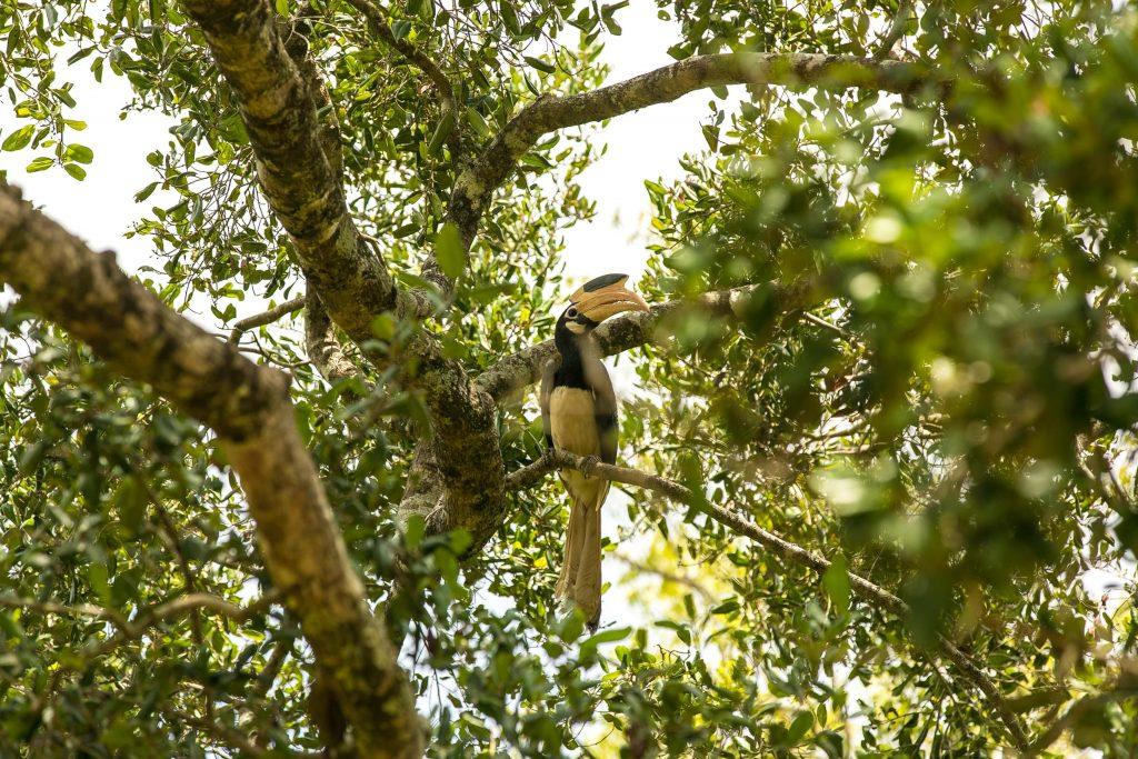 Bird Watching at Bundala National Park