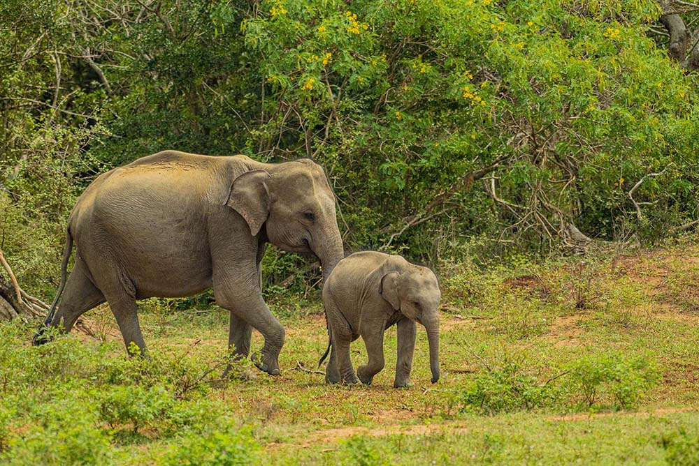 Elephant Safari in Sri Lanka