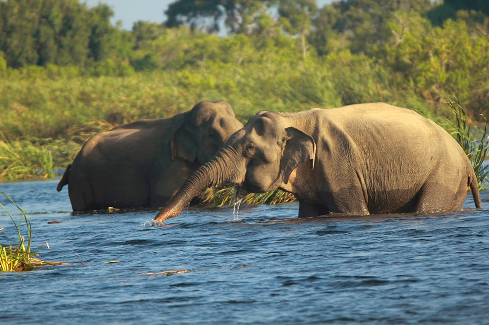 Elephants in Gal Oya National Park