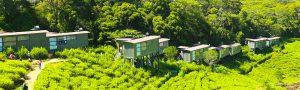Rainforest-Eco-Lodge-Banner