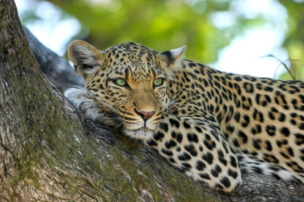 Safari at Wasgamuwa National Park