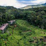 Rainforest Hotel