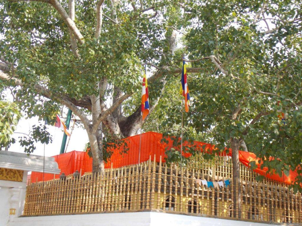 Jaya Sri Maha Bodhi in Anuradhapura